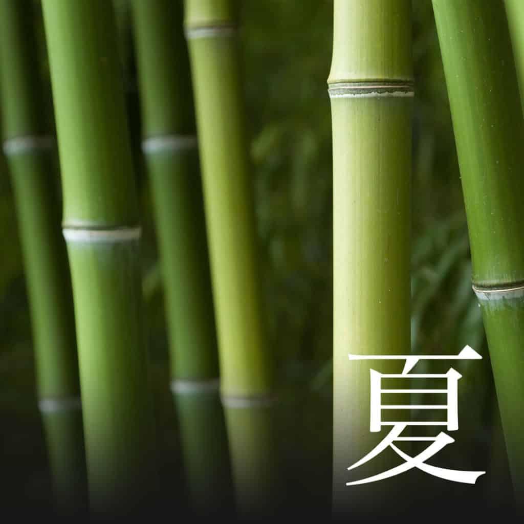 Summer Bambus